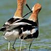 benedict: (birds: pals)