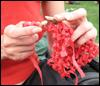 xtina: (knitting with sticks)