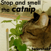 "hederahelix: My cat with her head buried in a live catnip plant and the phrase ""Stop and smell the catnip"" (catnip)"