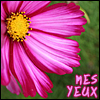 mes_yeux: (flowers)