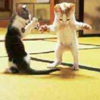 ewt: (aikido cat)