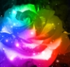 orangebeams15: This doesn't really match my profile name, but whatever. It's reminiscent of springtime. (Rainbow rose) (Default)