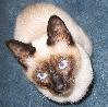 elizabear: (cat)
