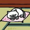 spoke: a siamese cat having a nap (kitteh)