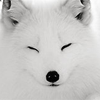 nanabi_no_taizai: (fox; snooze)