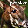 pronker: the beautiful, the fragile, saola (Default)
