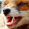sheistheweather: (Fierce, Angry)
