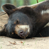 raidraptors: (★ Bear 01)
