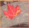 dawn_felagund: (autumn leaf)