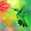 lbilover: (hummingbird 1)
