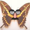 summerbutterfly: (ehvul)