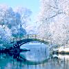 tristen84: (Magic bridge snow)