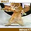 solarbird: (poor kitty!)