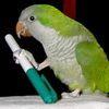 solarbird: (zoe)