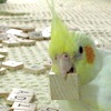 solarbird: (scrabblebird)