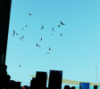 thefallingtypewriter: (Nightwing)