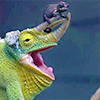 gonerunningaway: A green chameleon with a dark brown baby chameleon curled on its horn (Default)