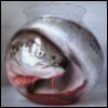 pbl6a_love: (Рыба в банке)
