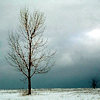 nightdog_barks: (Winter tree)