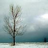 nightdog_barks: (Winter tree)
