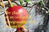 jolantru: (pomegranate)