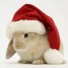 plotbunniofdoom: (xmas bunni)