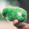 mockerybird: (green bird)
