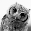 mockerybird: (what's up)