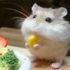 eriiar: (hamster)