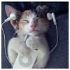 thebonesofferalletters: (music: kitten jams)