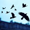 sheistheweather: (Flock)