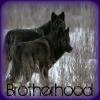 darkwolf: (Brotherhood by Oldscratch)