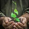 goss: (Planting a tree)