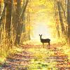 beceh: (lone deer)