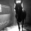 epsilon_pegasi: (horse:halo:greys)