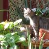 epsilon_pegasi: (cat:sun:green)