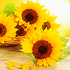 reganoutloud: (Sunflowers)