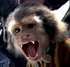raaven: (evil pirate monkey)