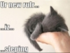 rileybear67: Tiny kitten sleeping in a hand (kitten overlord)