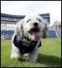 starmaki: Hank (baseball, dog, hank, cute)
