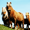 tewaters: wild horses watching you watch them (horses)