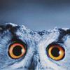darjeeling: ([ STOCK ] wide-eyed and unafraid)