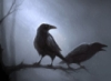sevencorvus: (raven)