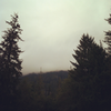 spookykingdomstarlight: foggy sky and trees (pnw)