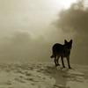 enjae: (wolf)