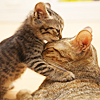 iki_teru: (stock: kitten kisses)