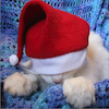 marcicat: (santa hat cat)