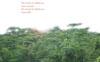 jolantru: (forest)