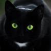 plumptiousone: (cat)