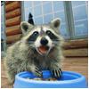 callum: w/ a bowl (OMG a raccoon)